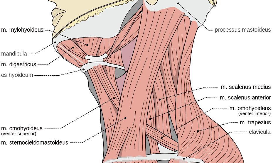 golf neck pain